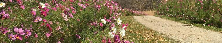 Photo of flowers along trail